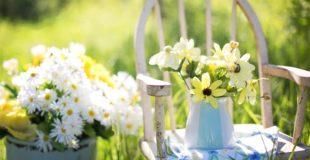 Best Gardening Blogs To Follow
