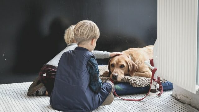 Best Dog Breeds for Kids to Play With